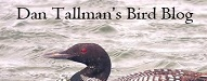 Dan Tallman's Bird Blogs