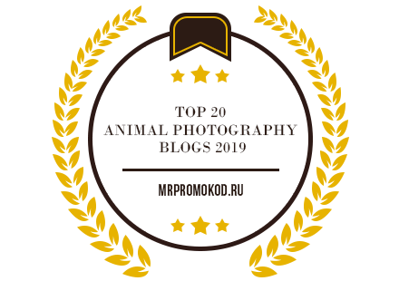 Banners for Top 20 Animal Photography Blogs 2019